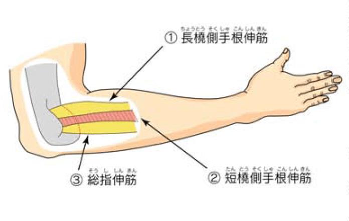 押す 付け根 と の 痛い 腕